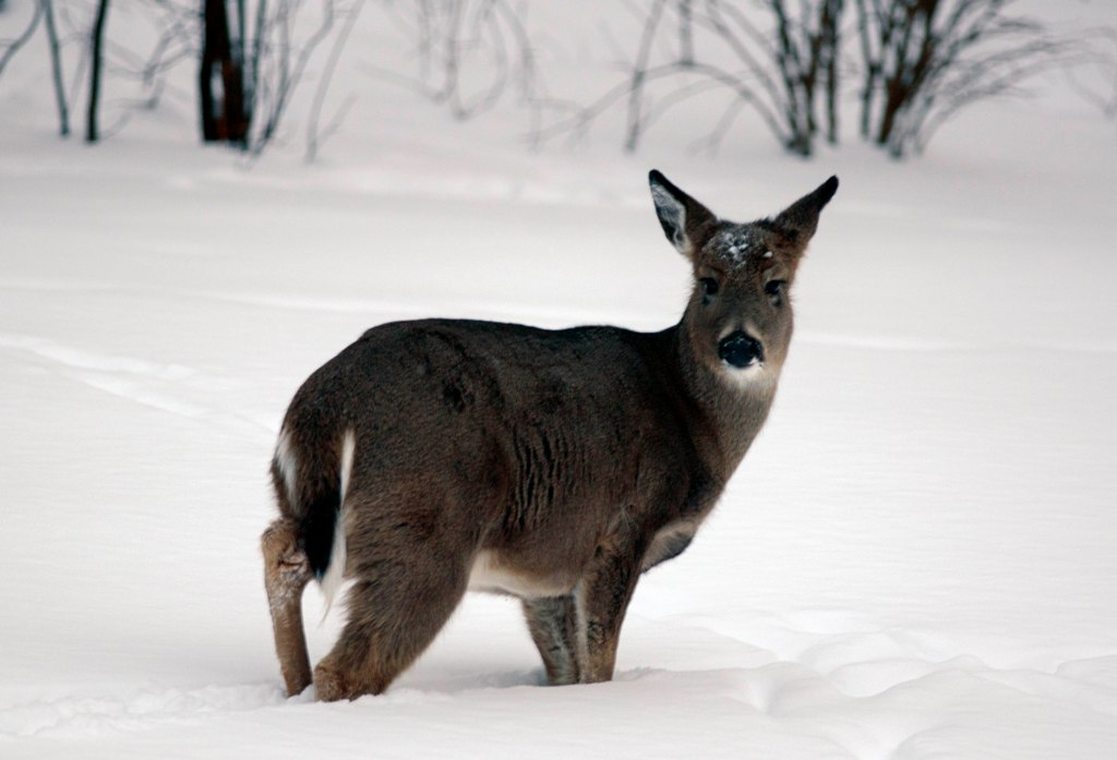 Upcoming Dnr Meetings Include Opportunities To Comment On within Michigan Deer Rut 2021