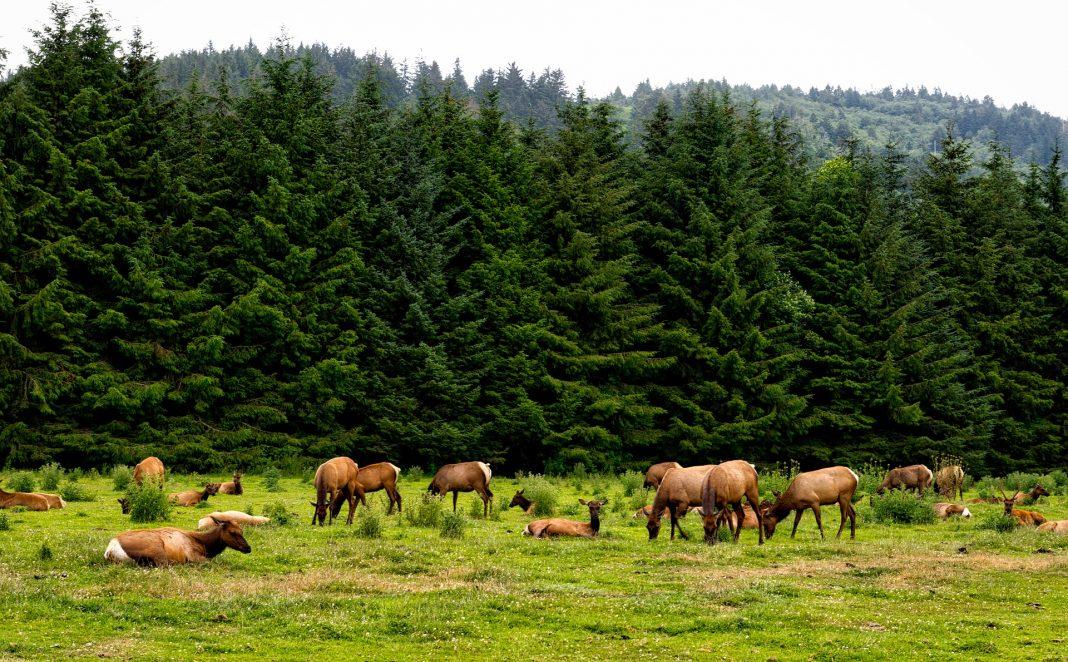 Wdfw Seeks 2021-2023 Hunting Season Input | Ehuntr throughout 2021 Deer Season In Kentucky