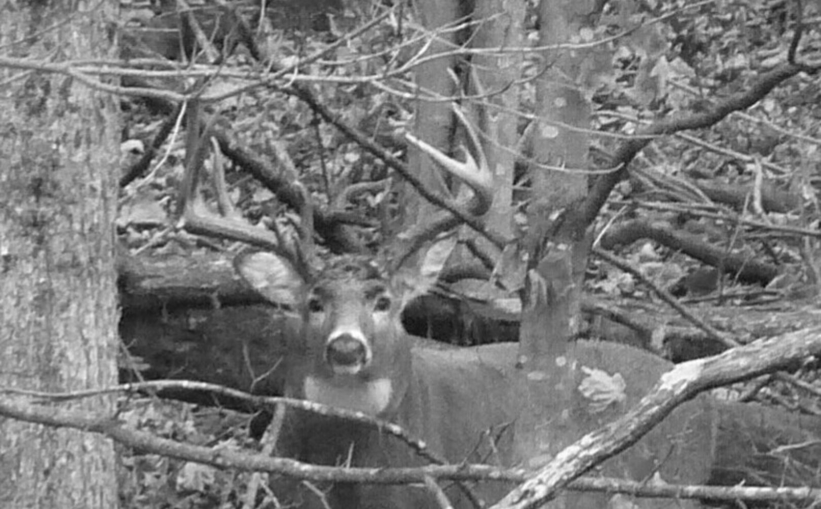When Is 2021 Whitetail Rut Predicted   Calendar Printables with Deer Rut 2021 Illinois