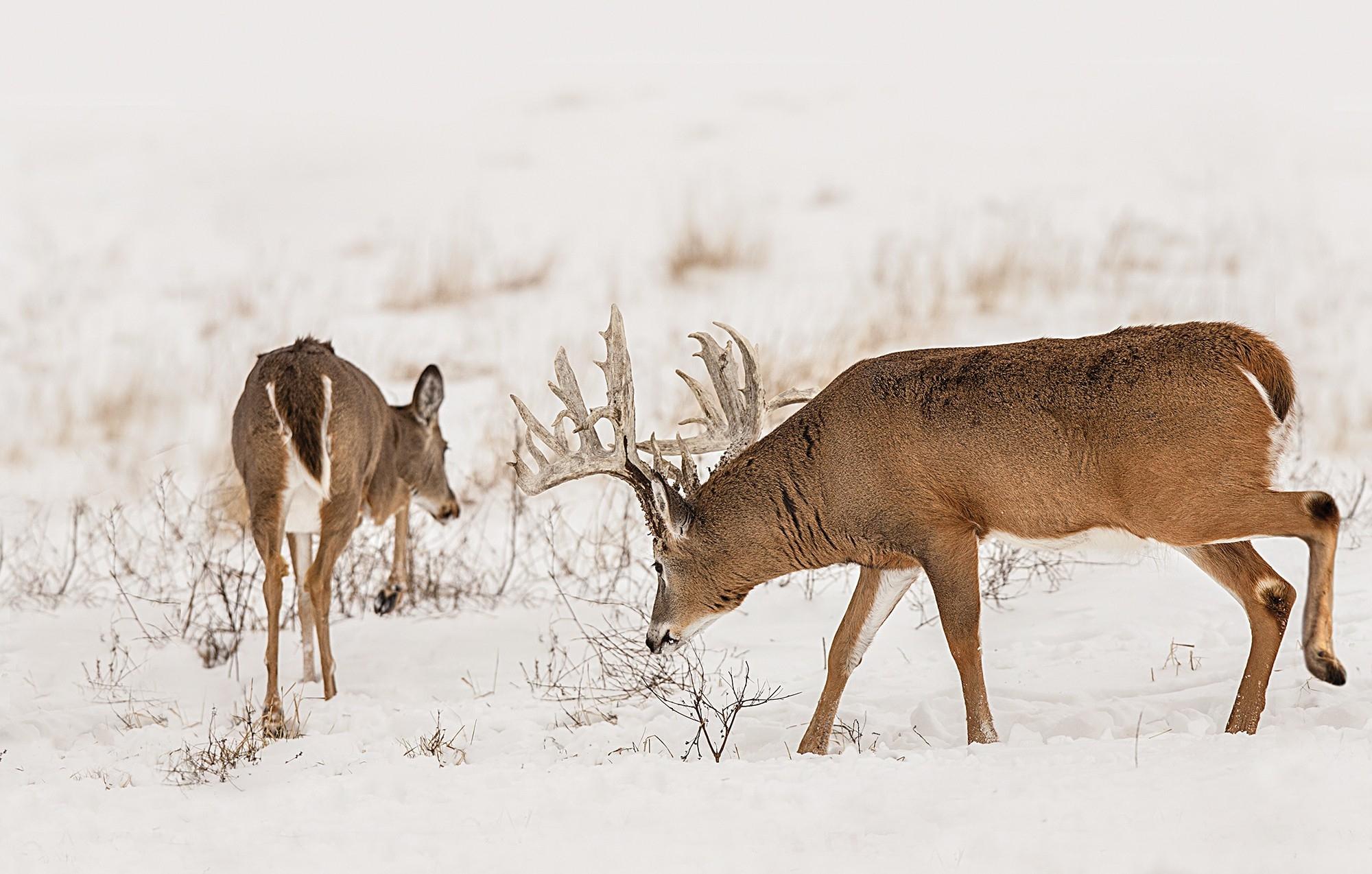 Md 2020 Deer Rut Predictions - Template Calendar Design within Deer Lunar Activity Calendar 2022