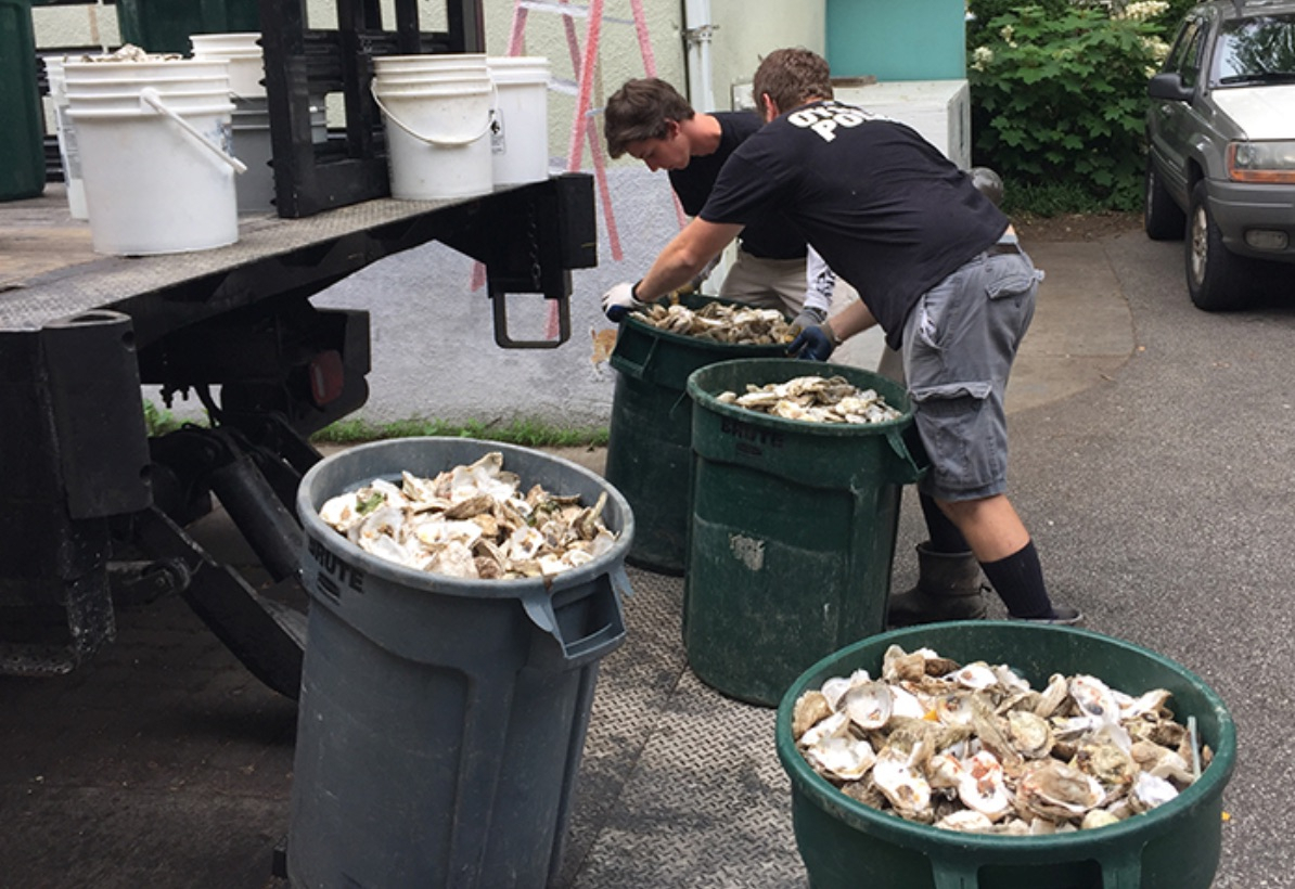 Pa Environment Digest Blog: Chesapeake Bay Oyster Recovery for Oyster Bay Sanitation Department