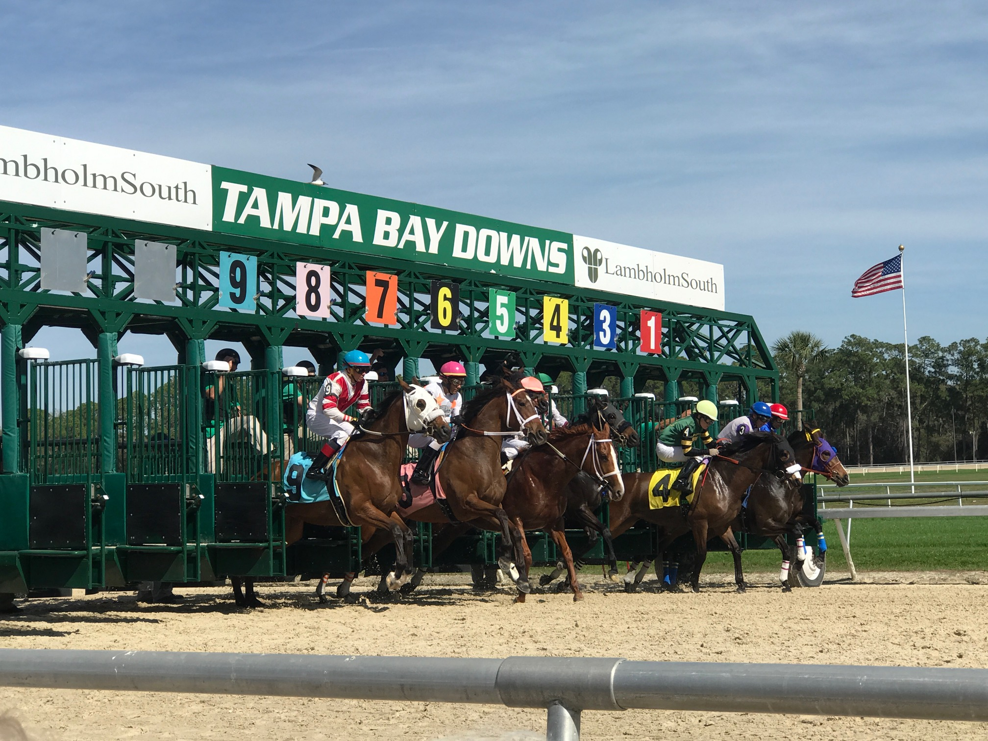 Tracks Operating In April Available To Wager On Line inside Tampa Bay Downs 2022 Schedule
